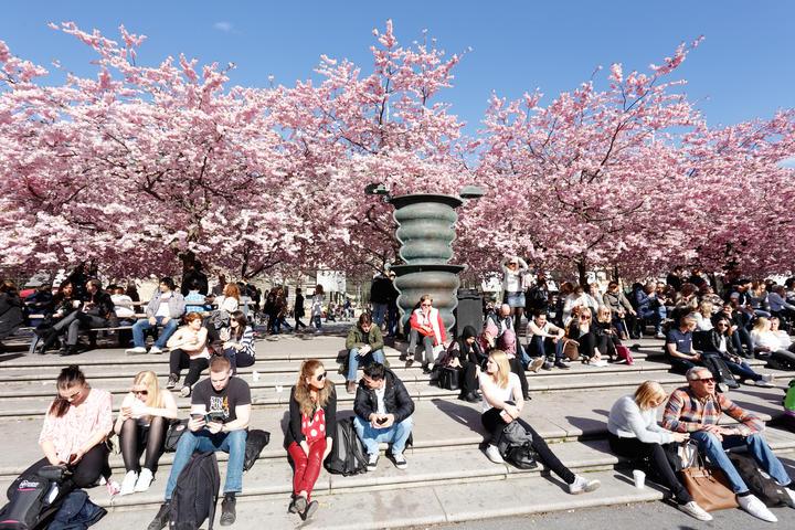 مردم استکهلم در حال لذت از بهار ویروسی