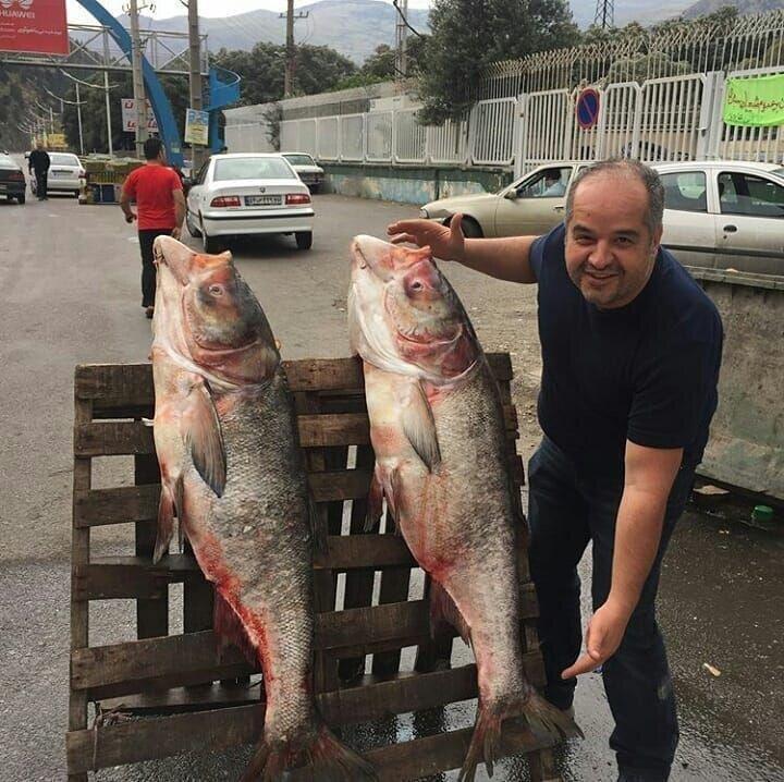 ماهی سفیدرود در گیلان