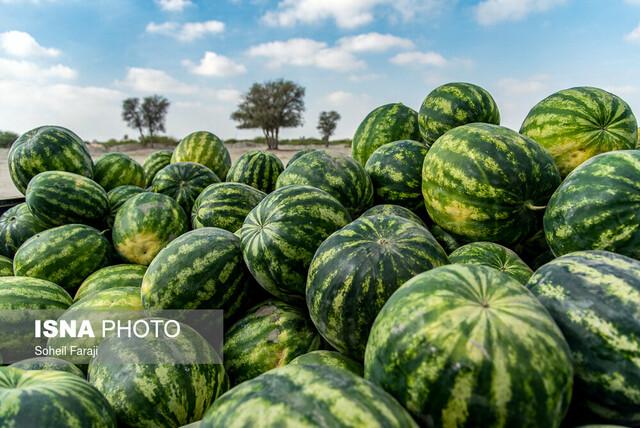 جاسازی ۱۷ کیلو تریاک در هندوانه