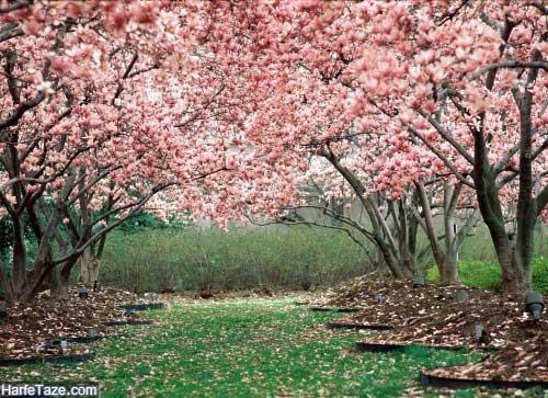 تدابیر طب سنتی برای فصل بهار