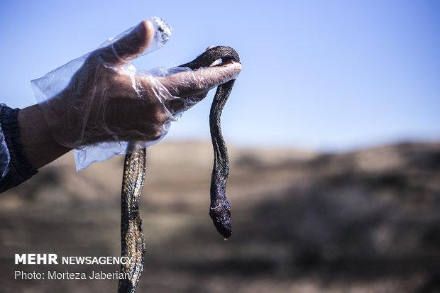 مالچ پاشی در خوزستان، مرگ پاشی بر زندگی