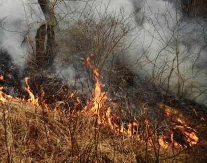 به کارگیری نیروهای ارتش و بسیج برای مهار آتش سوزی پارک ملی گلستان