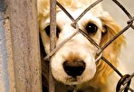 چگونه حیوان آزار میشویم؟ حیوان آزارها برای انسان هم خطرناکند (فیلم)