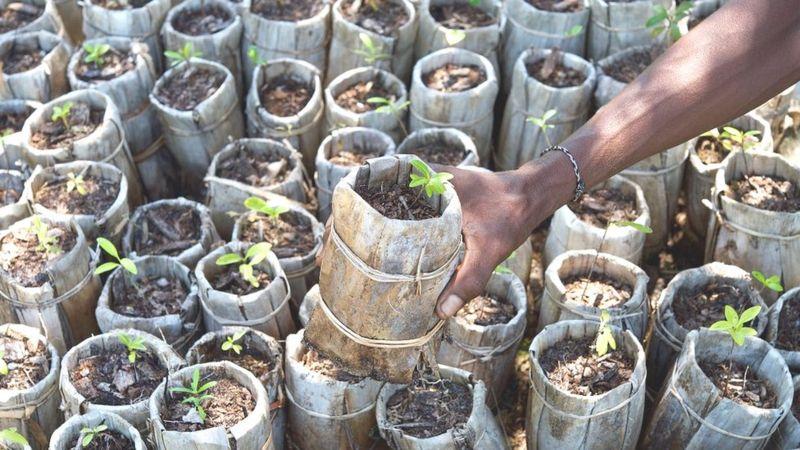 ده اصل طلایی مهم درختکاری که محققان منتشر کردند