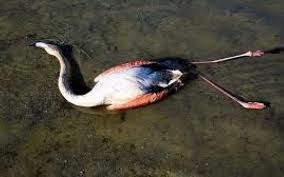 مرگ بیش از ۱۹ هزار پرنده مهاجر آبزی در ۳۱ روز