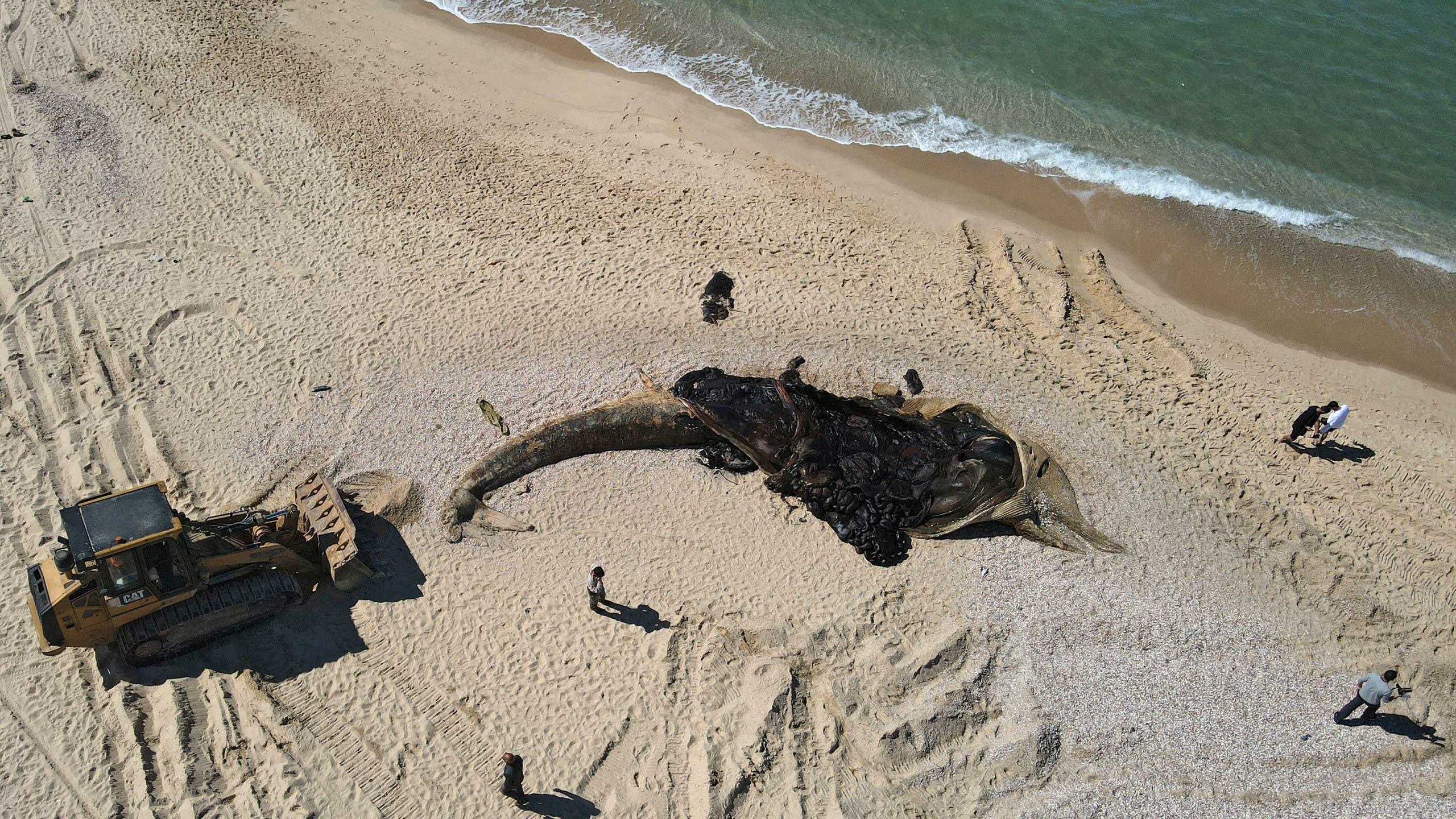 اتهام جدید اسرائیل: ایران، سواحل اسرائیل را آلوده کرده / این اقدام تروریستی است