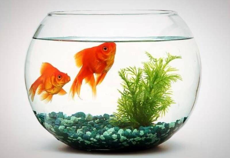ماهی ها کرونا نمی گیرند