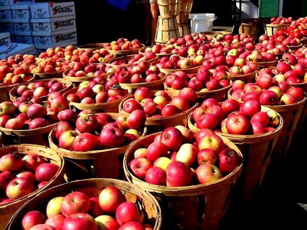 با ممنوعیت ناگهانی صادرات/ بیش از ۲ هزار کامیون سیب درختی در گمرکات دپو شد