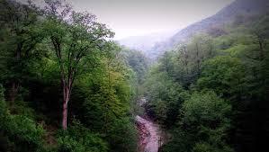 امیدواری به بازپس گیری جنگل های هیرکانی از اوقاف