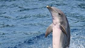 شخصیت دلفینها شبیه به انسان است