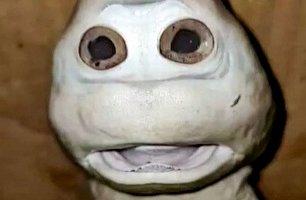 کوسه ای با صورت انسان (+عکس)