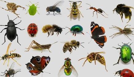 حشرات ناقل