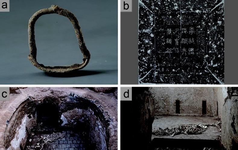 جسد الاغ در مقبره باستانی