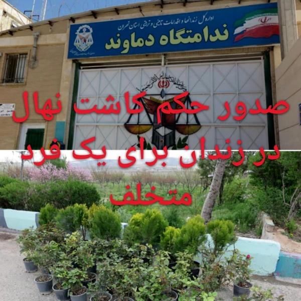 صدور حکم کاشت ۵۰ اصله نهال به جای حبس در زندان