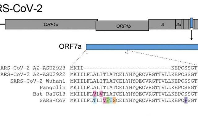 کشف یک جهش منحصر به فرد در کروناویروس