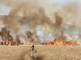 ۱۶۰ هکتار گندم و جو بالاده کازرون بر اثر خطای انسانی سوخت؟!