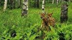 تولههای حیوانات در خطرند؛ لطفا پا پس بکشید (فیلم)