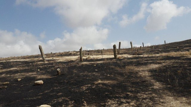 مسئول بسیج دانشجویی همدان: آتشسوزی مقبره «استر و مردخای» با بیانیه ما ارتباطی ندارد