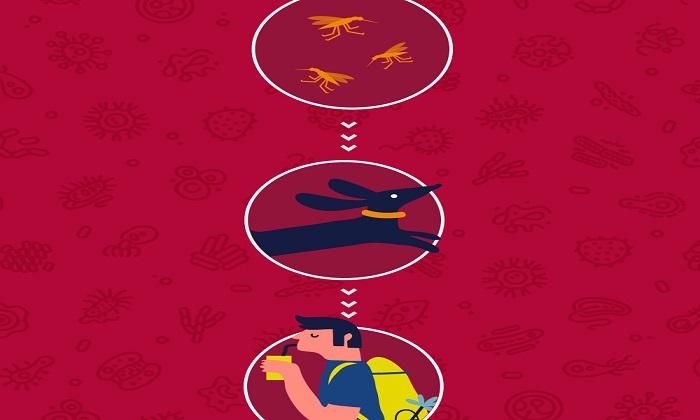 درباره بیماریهای زونوتیک/ چرا عفونتهای حیوانات برای انسان بسیار خطرناک هستند؟