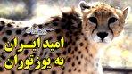 ایران چشم انتظار فرزندانش/بویی که نرها را جذب می کند (فیلم)