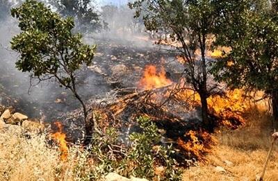 ۲۱۳ هکتار از اراضی قزوین در آتش سوخت