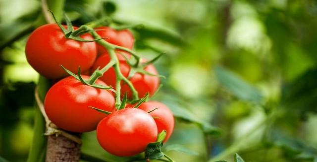 معرفی 7 ماده غذایی سرشار از ویتامین A که نباید از آنها غافل شد