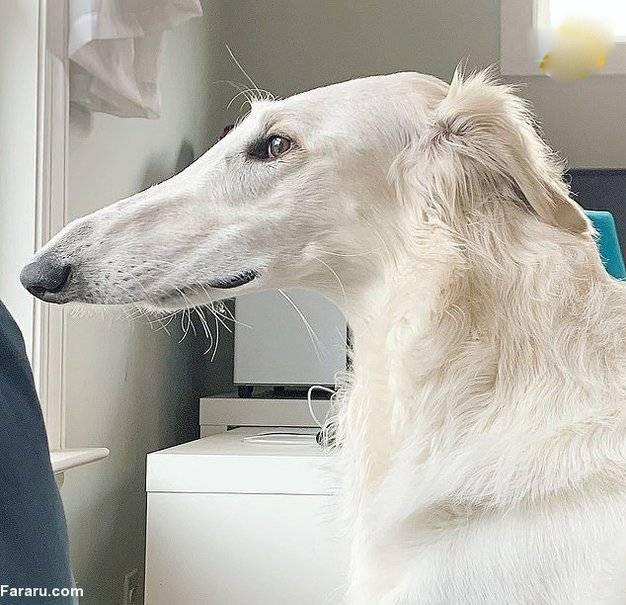 سگی با بزرگ ترین بینی