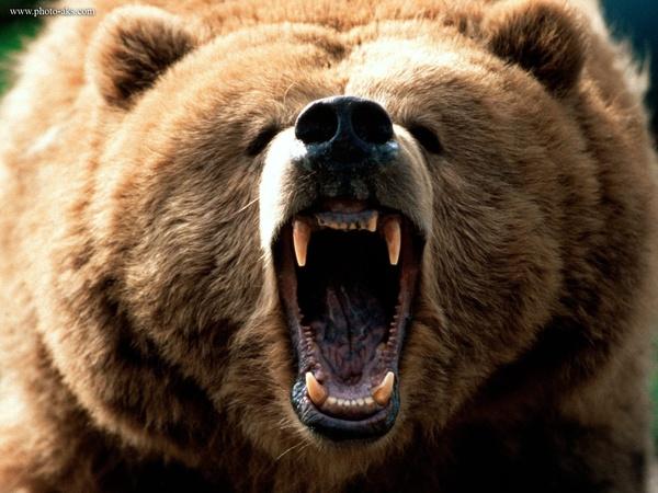 آذربایجان غربی/ حمله خرس وحشی به زن پیرانشهری