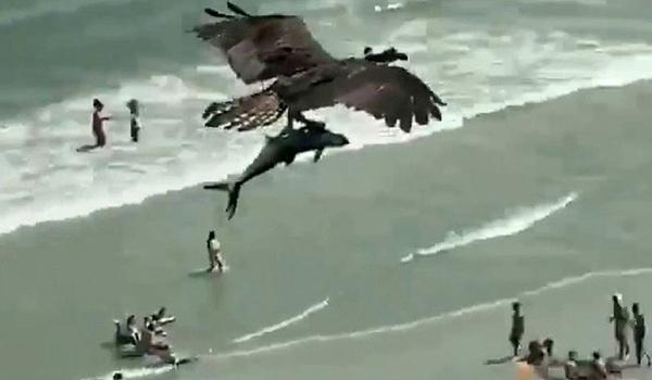 صحنه عجیب پرواز عقاب با کوسه در آسمان (+عکس)