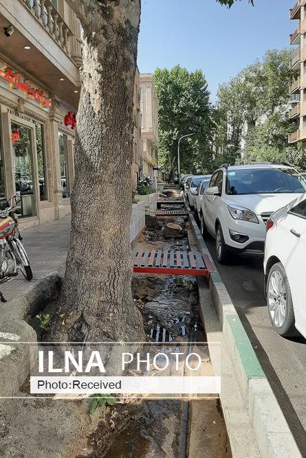 قطع بدون مجوز درختان خیابان فلسطین/ شهردار متخلف برکنار شد