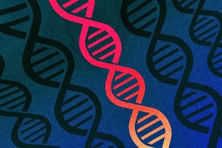 ژنهای انسان