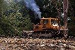 دفن زباله وسط جنگل مازندران/ شیرابه عامل بیماری پوستی حیوانات (فیلم)