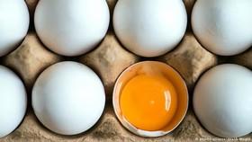 وزیر جهاد کشاورزی: کاهش قیمت تخم مرغ در روزهای آینده