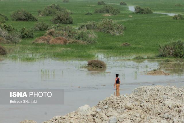 کمک ۱۰ میلیون یورویی اتحادیه اروپا برای احیای تالاب هامون