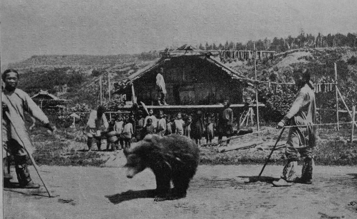 نوشیدن خون خرس