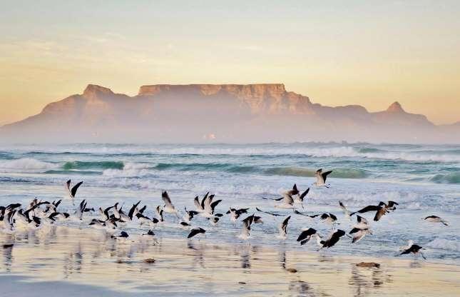 کوه تیبل در آفریقای جنوبی