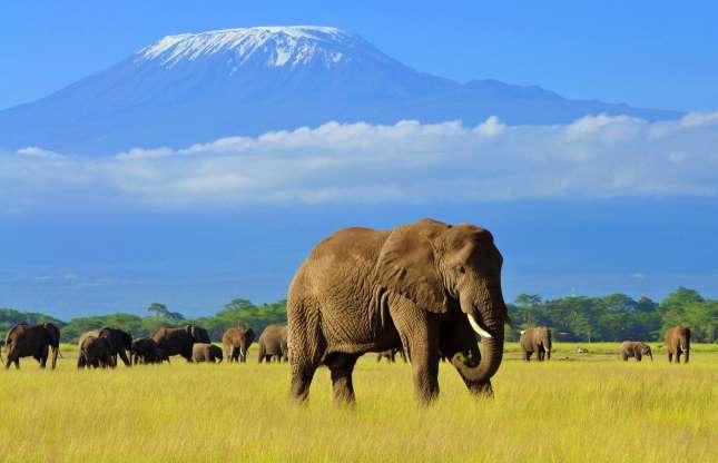 کوه کلیمانجارو در تانزانیا