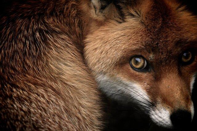حیواناتی که ممکن است در ایران نیست شوند