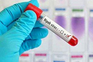 ویروس نیپا چیست؟