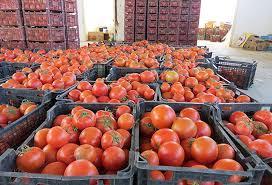 گمرک: بازگشت محموله های گوجه فرنگی از عراق به دلیل خرابی