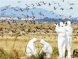 بیماری آنفلوآنزای فوق حاد پرندگان در تهران مشاهده نشده است