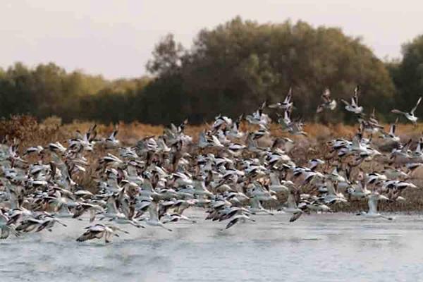 شناسایی دومین کانون آنفلوانزای فوق حاد پرندگان در مازندران