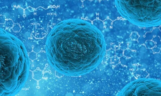 جهشهای عامل سرطان در سلولهای بنیادی انسان دیده نمیشوند