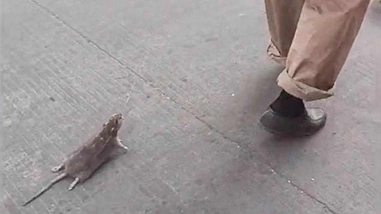 موش گردانی مرد چینی در خیابان! (+عکس)