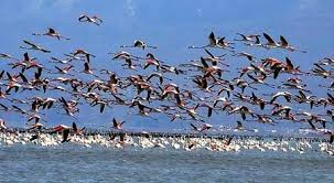 سالانه ۵۶۰۰ کیلوگرم سرب وارد تالاب میانکاله مازندران میشود