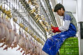 هشدار «دبیر انجمن جوجه یک روزه» نسبت به کمبود گوشت در کشور
