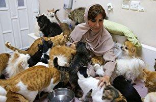 زنی که 500 گربه و سگ در خانه دارد! (+عکس)