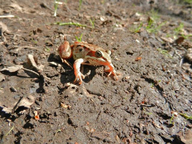 روشهای دفاعی عجیب حیوانات در مواجهه با شکارچیان