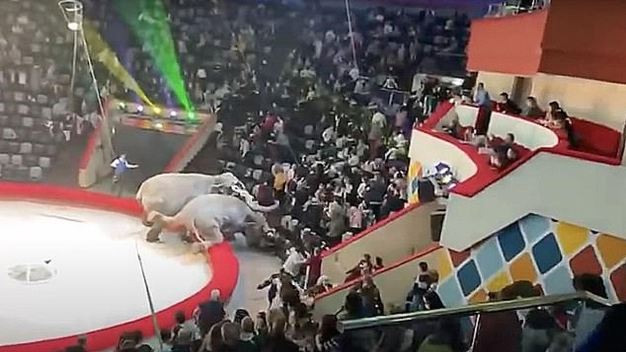 مبارزه نابهنگام فیل ها وسط نمایش سیرک! (+عکس)