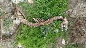 ماجرای کشف اسکلت دایناسور در گرگان